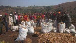 People celebrating a large harvest