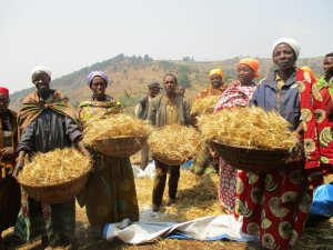 A group of people carrying baskets of harvest