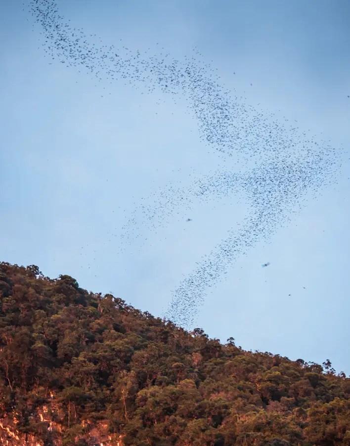 Gunung Mulu Bat Exodus Deer Cave