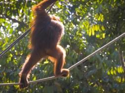 Semmengoh Orangutan Rehabilitation Centre