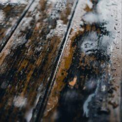 Mold on wood floors