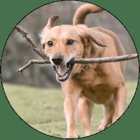 Dog-Activities-banner