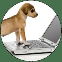 Puppy-using-laptop