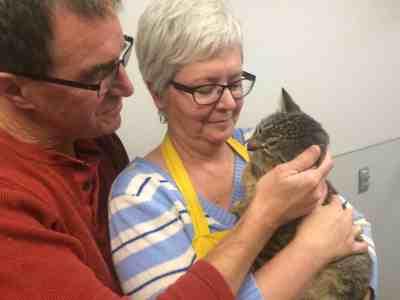 winnipeg-cat-adoption-rescue