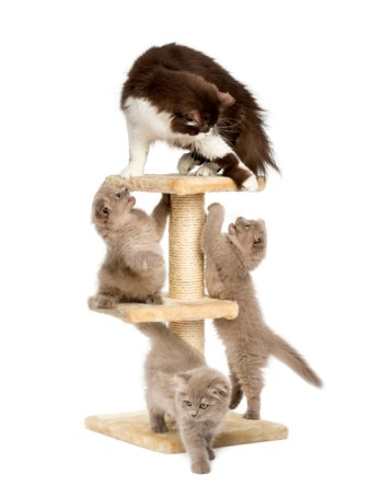 cat and kittens playing on scratching post