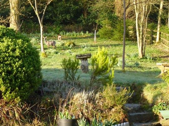 Woodland Garden, Winsbere