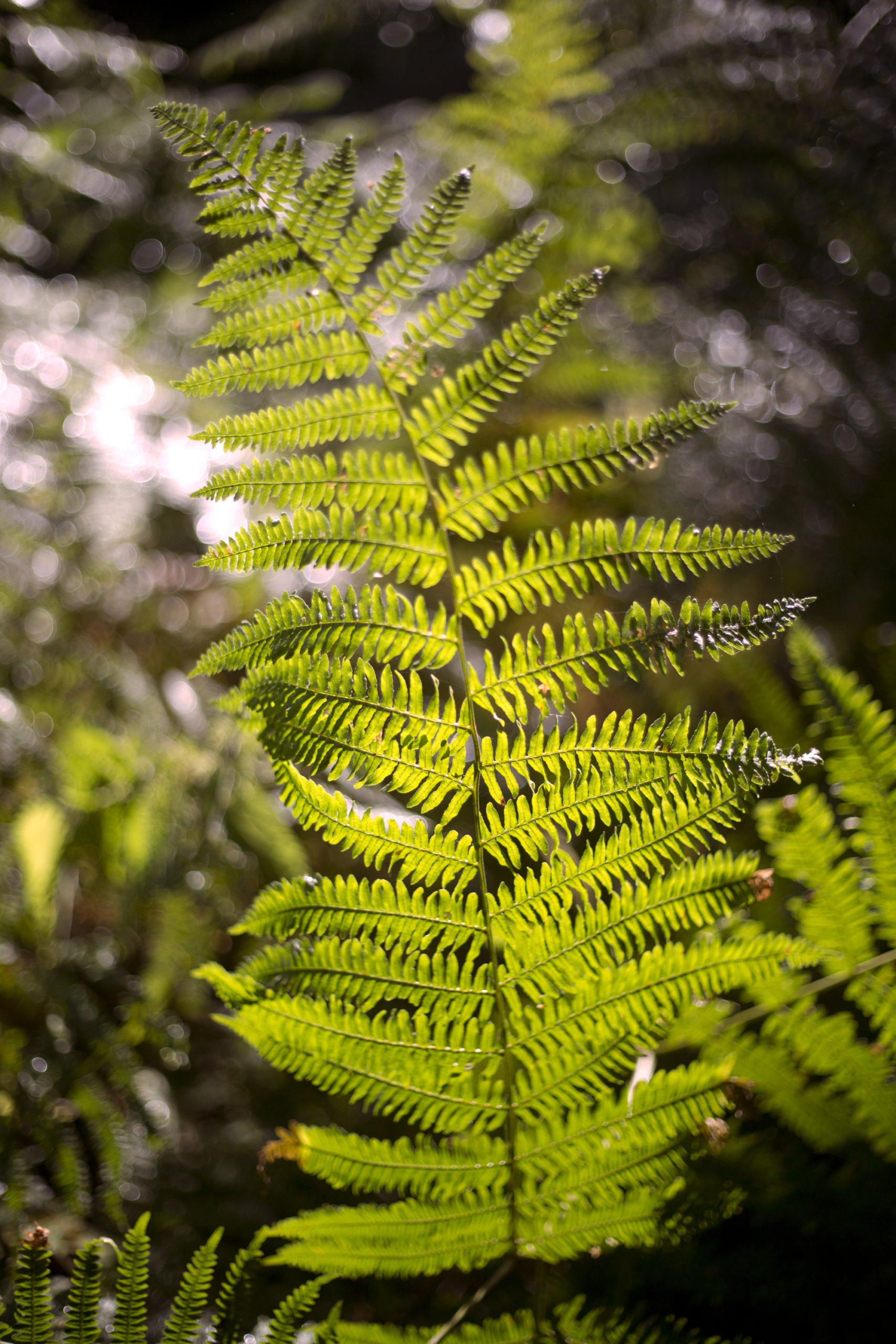 Close up of a fern woodland outdoor wedding photographer wales