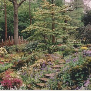 Japanese Bridge and Rock Garden, c. 1990, Winterbourne House and Garden, Digging for Dirt