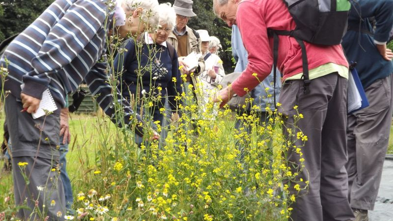 Members of the Birmingham and Black Country Botanical Society and Warwickshire Flora Group attempt to identify a mustard plant, Winterbourne House and Garden, Digging for Dirt
