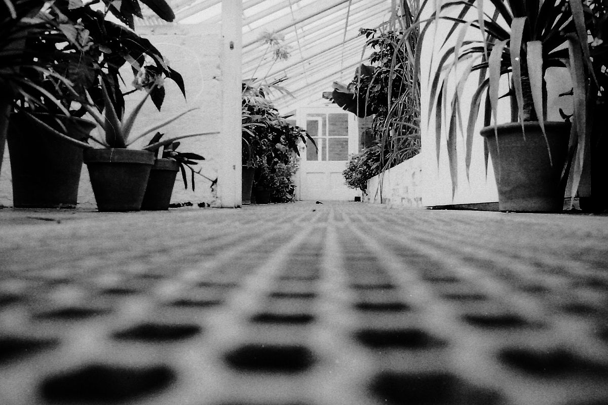 The Lean-to Glasshouse, photograph by Chris Rigby, film photography, Winterbourne House and Garden, Digging for Dirt