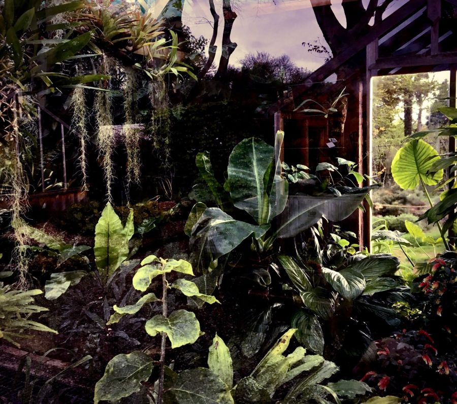 The Gilbert Orchid House, Snapshot, Jo Gooding, Digging for Dirt, Winterbourne House and Garden