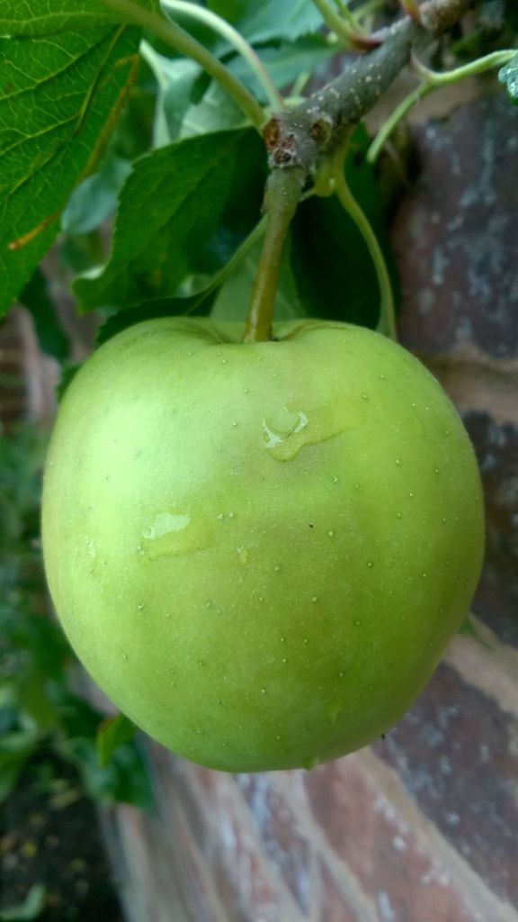 Apple, Winterbourne House and Garden, Digging for Dirt, Monthly Masterclass: August