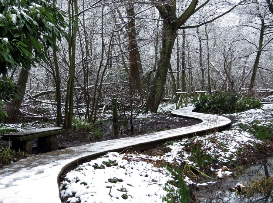 The Woodland Walk, photograph by Susan Georgiou, Snapshot, Winterbourne House and Garden, Digging for Dirt