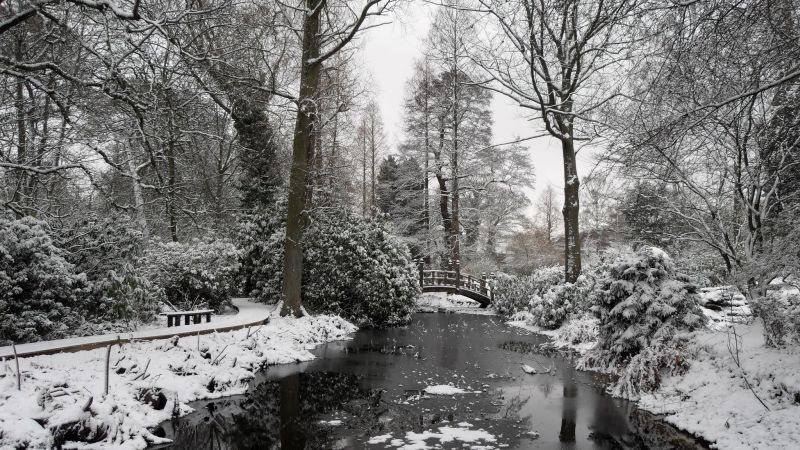 The Rock Garden Pool in snow, photograph by Susan Georgiou, Snapshot, Winterbourne House and Garden, Digging for Dirt