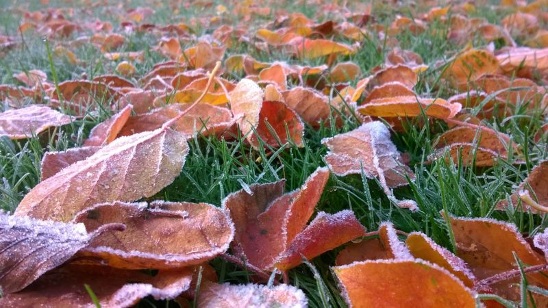 Ground frost, Now and Then: November, Winterbourne House and Garden, Digging for Dirt
