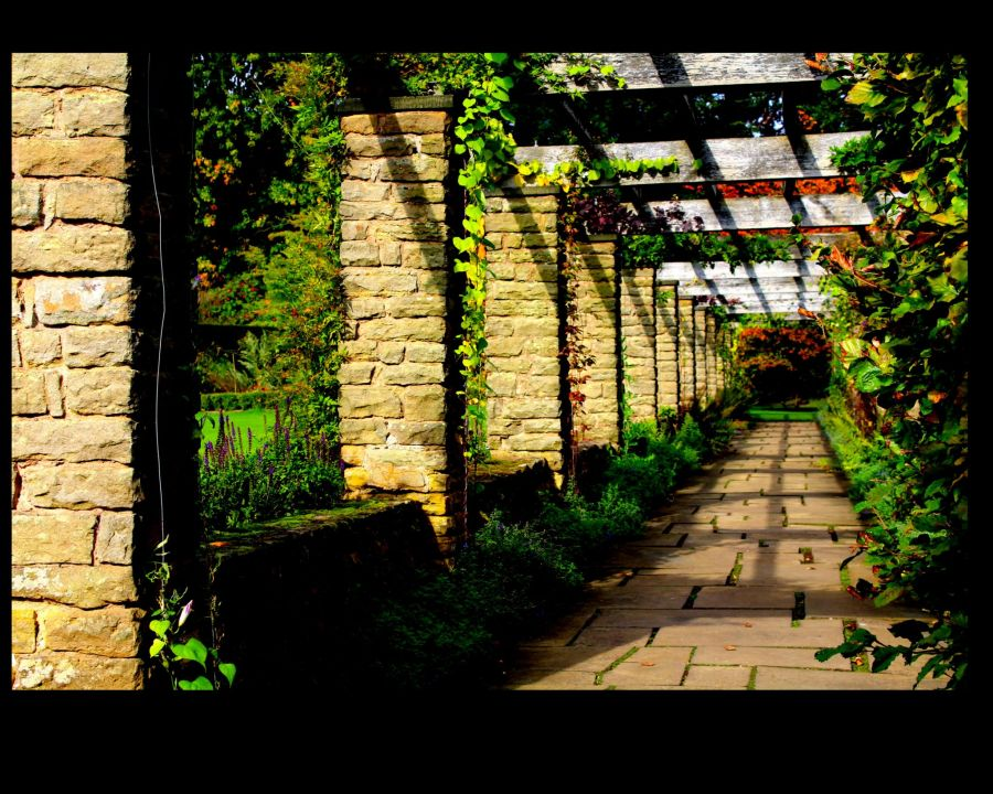 The Pergola, photograph by Peter Leadbetter, Snapshot, Winterbourne House and Garden, Digging for Dirt