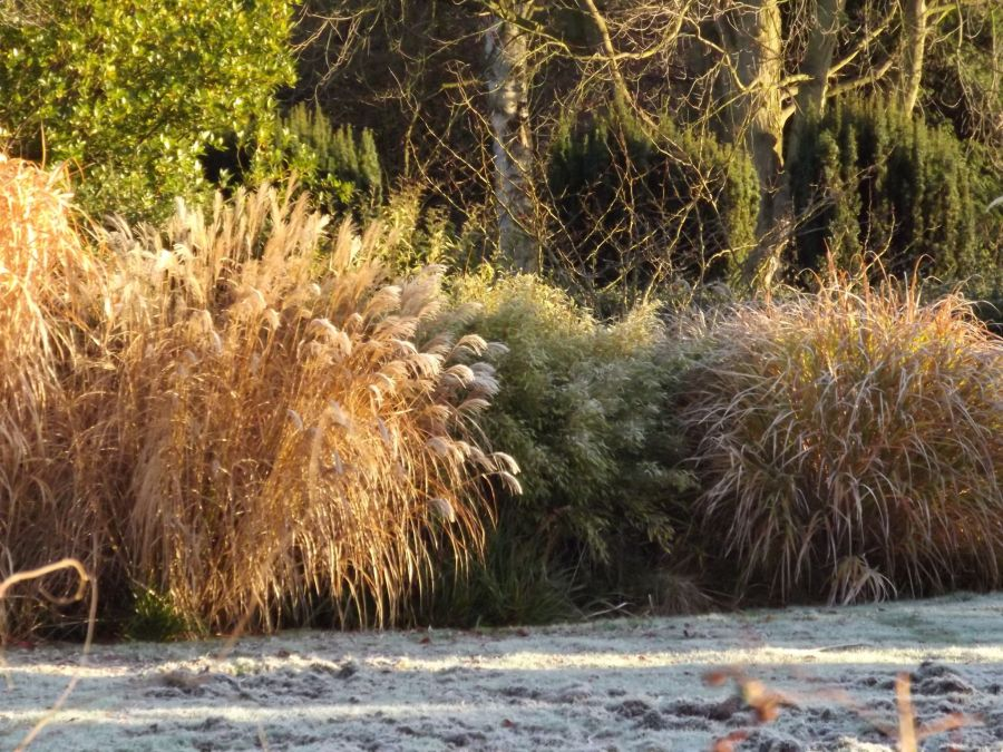 Miscanthus, Now and Then, Winterbourne House and Garden, Digging for Dirt