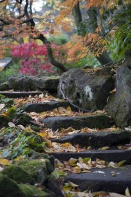 The Sandstone Rock Garden in November, photograph by Jenny Lilly, Winterbourne House and Garden, Digging for Dirt