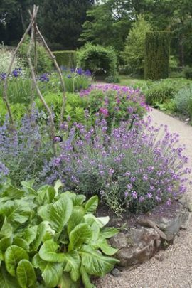 The Pink and Blue Border, photograph by Jenny Lilly, Winterbourne House and Garden, Digging for Dirt