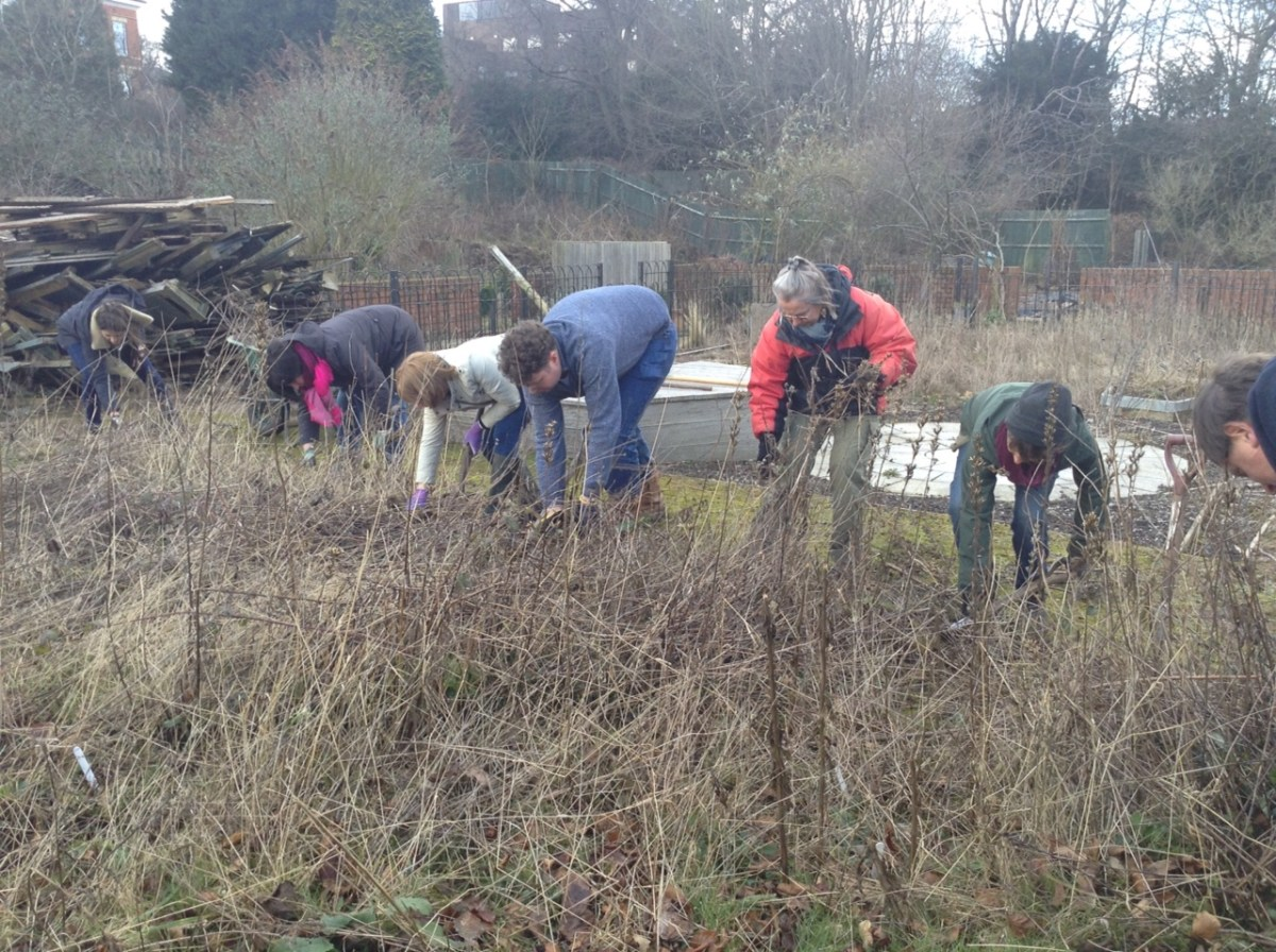 Cutting back borders in the Teaching Garden, RHS Level 2 Certificate in the Principles of Garden Planning, photograph by Ruth Davis, Winterbourne House and Garden, Digging for Dirt, Lolly Gautier-Ollerenshaw