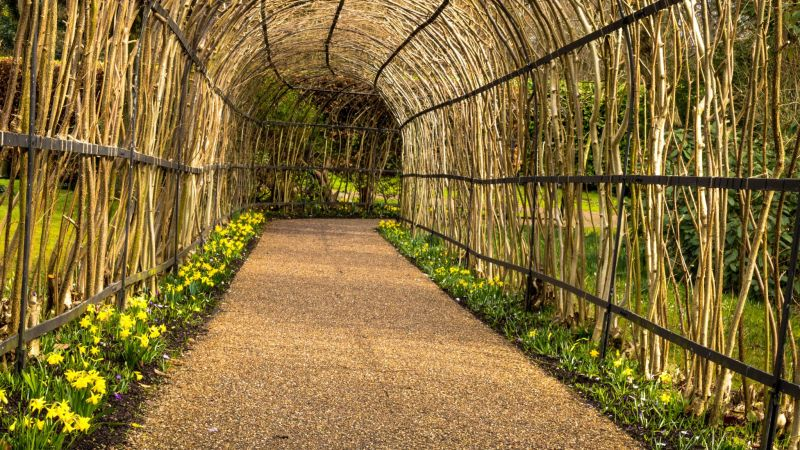 Narcissus 'Tete-a-Tete' planted along the Nut-Walk path, photograph by Maggie Bucknall, Now and Then March, Winterbourne House and Garden, Digging for Dirt