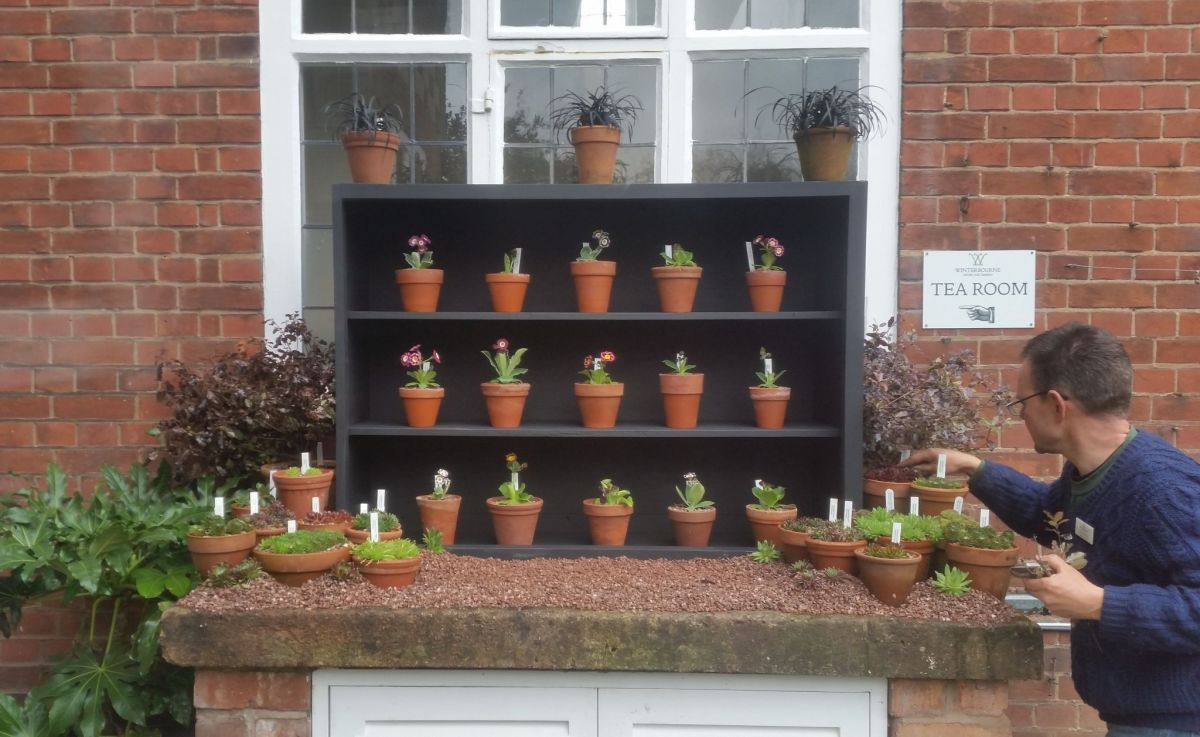 Putting the finishing touches to the auricula theatre, photograph by Leighanne Gee, Now and Then April, Winterbourne House and Garden, Digging for Dirt