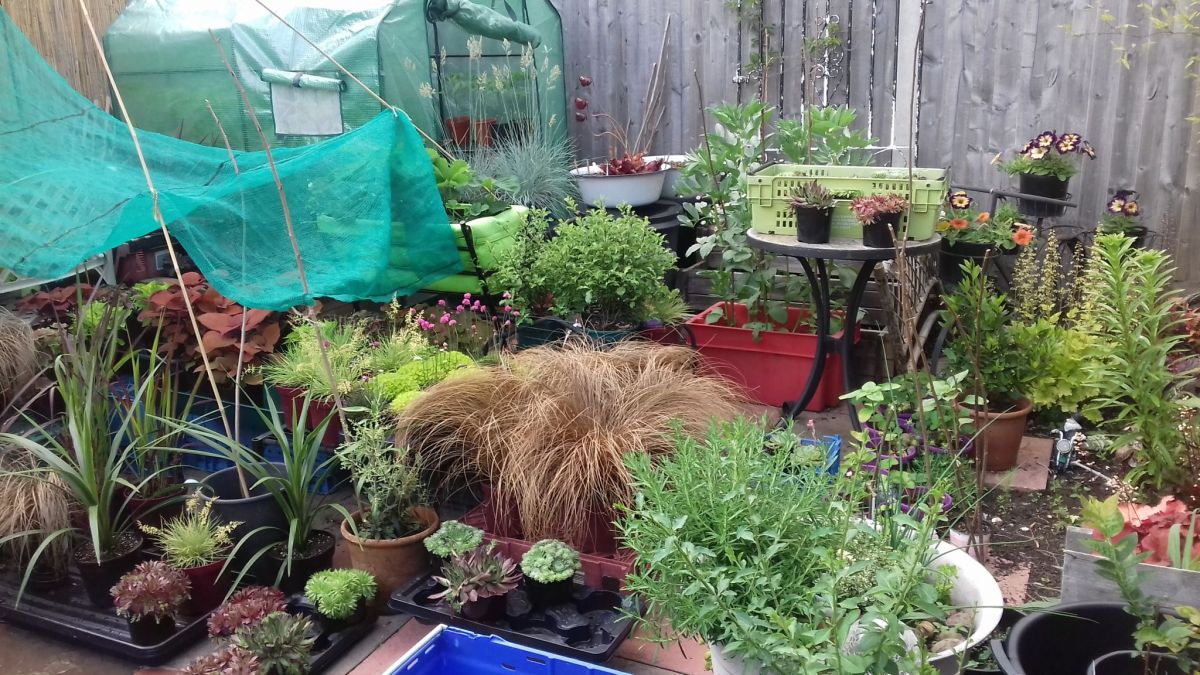Carefully selected plants being grown in preparation, Cath Fletcher, Winterbourne House and Garden, Digging for Dirt