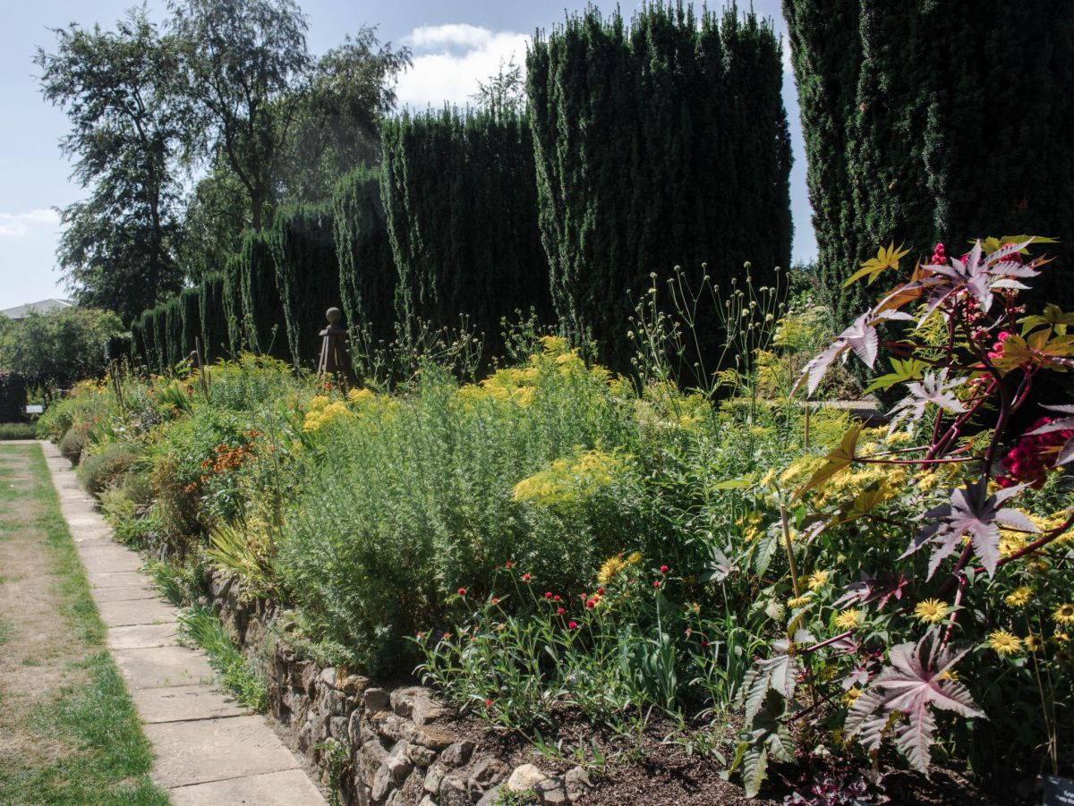 The Red and Yellow Border, photograph by Maggie Bucknall, Now and Then August, Winterbourne House and Garden, Digging for Dirt
