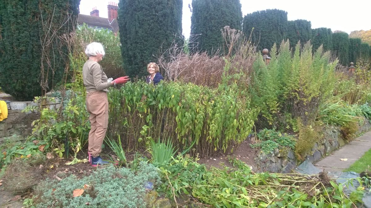Garden Volunteers Hazel Bland and Rosie Jones dividing Inula hookeri in the Red and Yellow Border, Now and Then August, Winterbourne House and Garden, Digging for Dirt