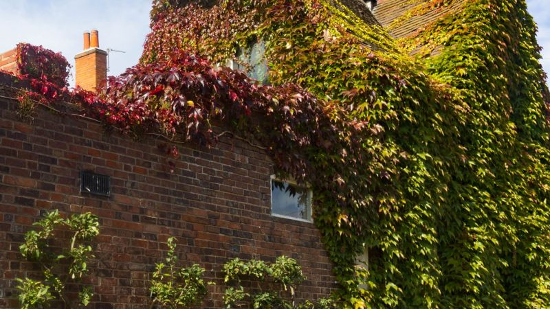Exterior photo of Winterbourne House and Garden at the beginning of Autumn