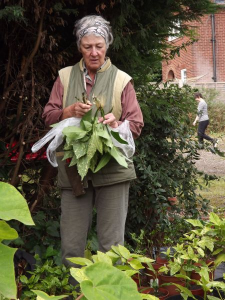 Linda Eggins with her water rooted Aucuba cuttings, The Week That Was, Winterbourne House and Garden, Digging for Dirt