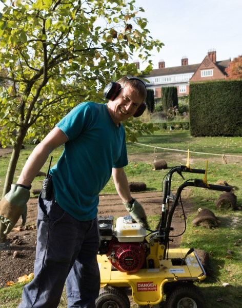 Huw helps lift turf on the Arboretum Lawn, photograph by Maggie Bucknall, The Week That Was, Winterbourne House and Garden, Digging for Dirt