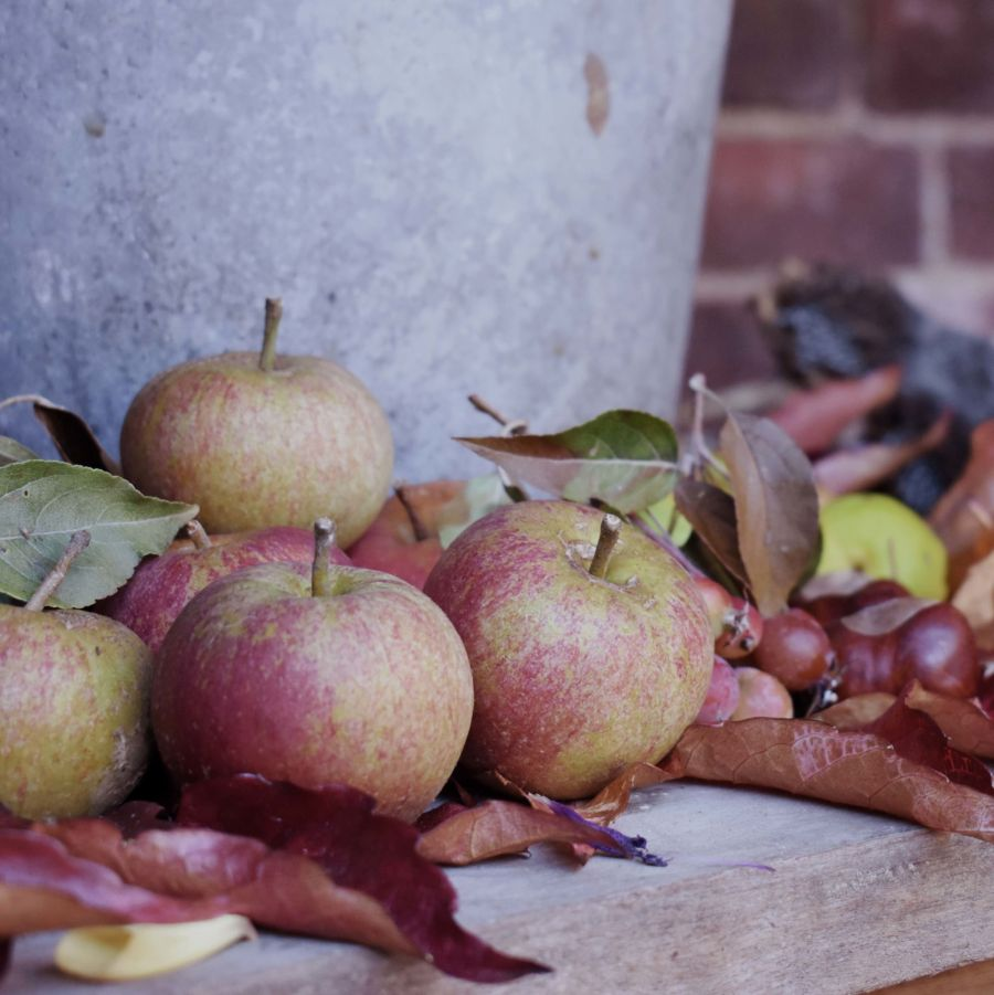 Harvest display in the Old Kitchen Courtyard, photograph by Victoria Buchanan, Snapshot, Winterbourne House and Garden, Digging for Dirt