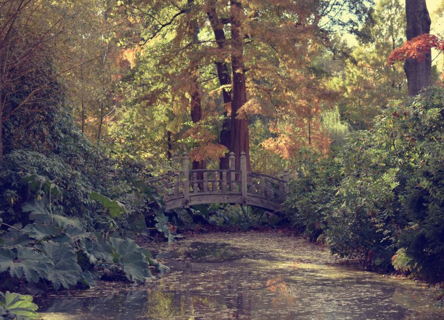 The Japanese Bridge, photograph by Victoria Buchanan, Snapshot, Winterbourne House and Garden, Digging for Dirt