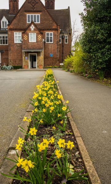 Narcissus 'Tete-a-tete' planted alongside the path leading to the front door of the House, photograph by Maggie Bucknall, The Week That Was, Digging for Dirt, Winterbourne House and Garden