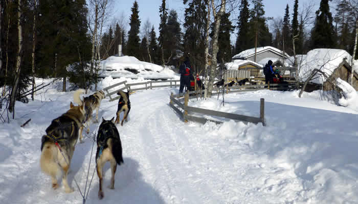 Huskie safarie in Lapland