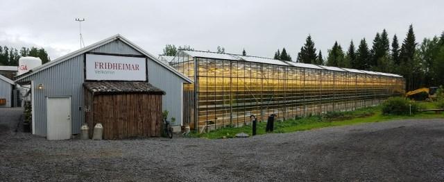 Tomato greenhouse at Friðheimar farm