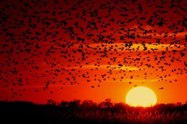 Tg Naturalistico: uccelli e migrazione