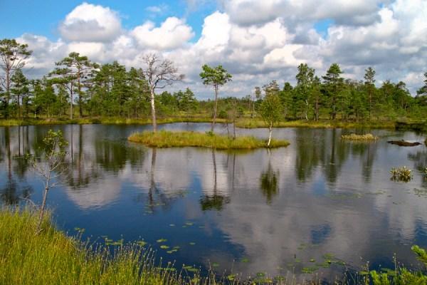 Bracconieri, rapaci ed Estonia – Pianeta Terra