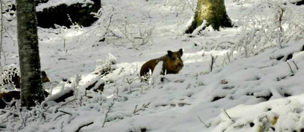 Cemento, orsi polari e Vulci – Pianeta Terra