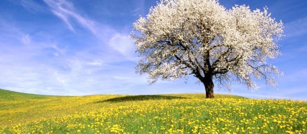 Etciù! Sta arrivando la Primavera!