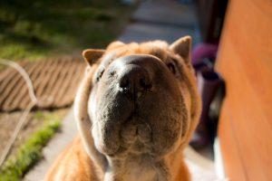 Maya: qualcosa di più di un semplice cane