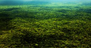 Foresta Amazzonica for dummies: tutto quello che c'è da sapere e come agire