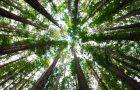 Cookpad, iniziativa a favore dell'ambiente