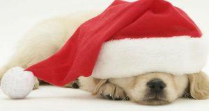 Jingle Bells 2.0