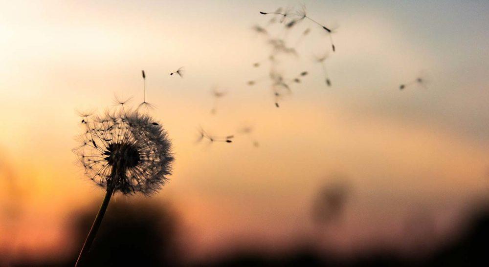 felicità e serenità