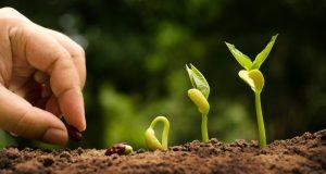 Chi semina, raccoglie