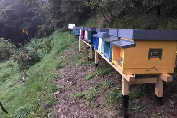 Dal battito d'ali d'un ape… uno tsunami positivo