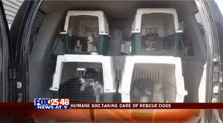 Rescued Animals 3-20150722221352_1440303499559.png
