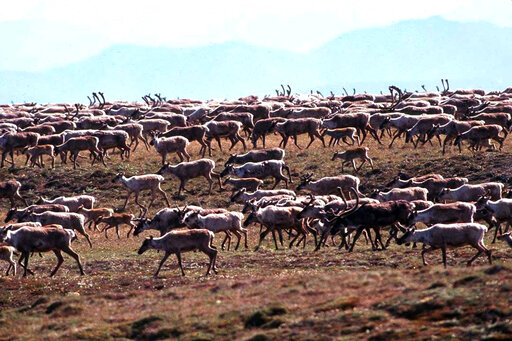 Groups sue for information on Arctic refuge lease sale | FOX2548